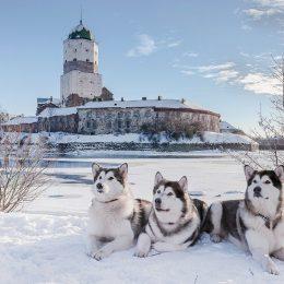 выборг зима2